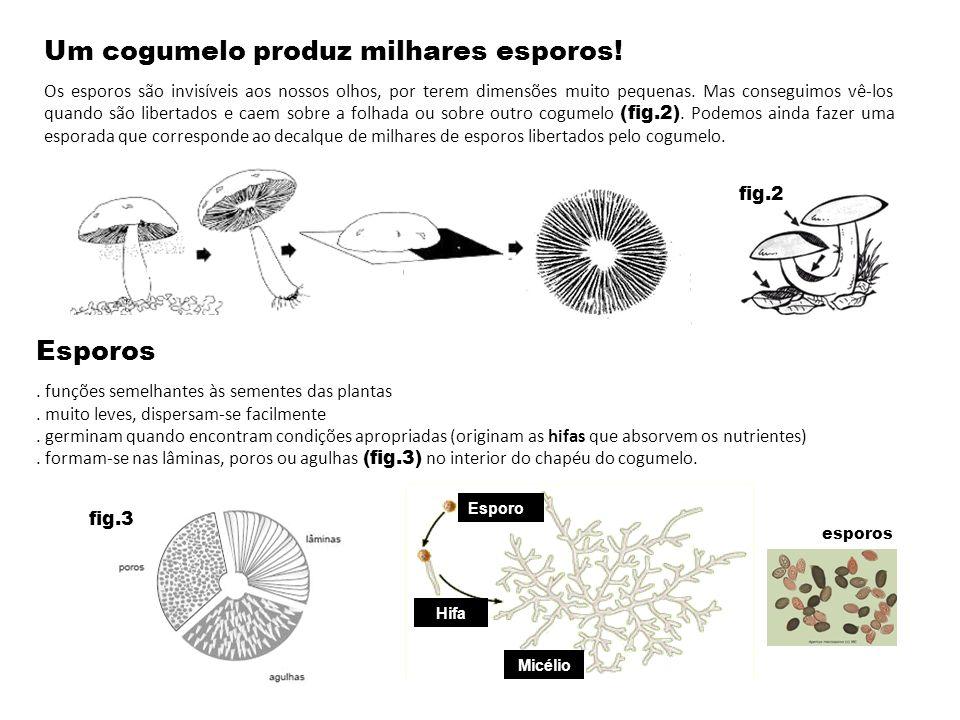 Um cogumelo produz milhares esporos!
