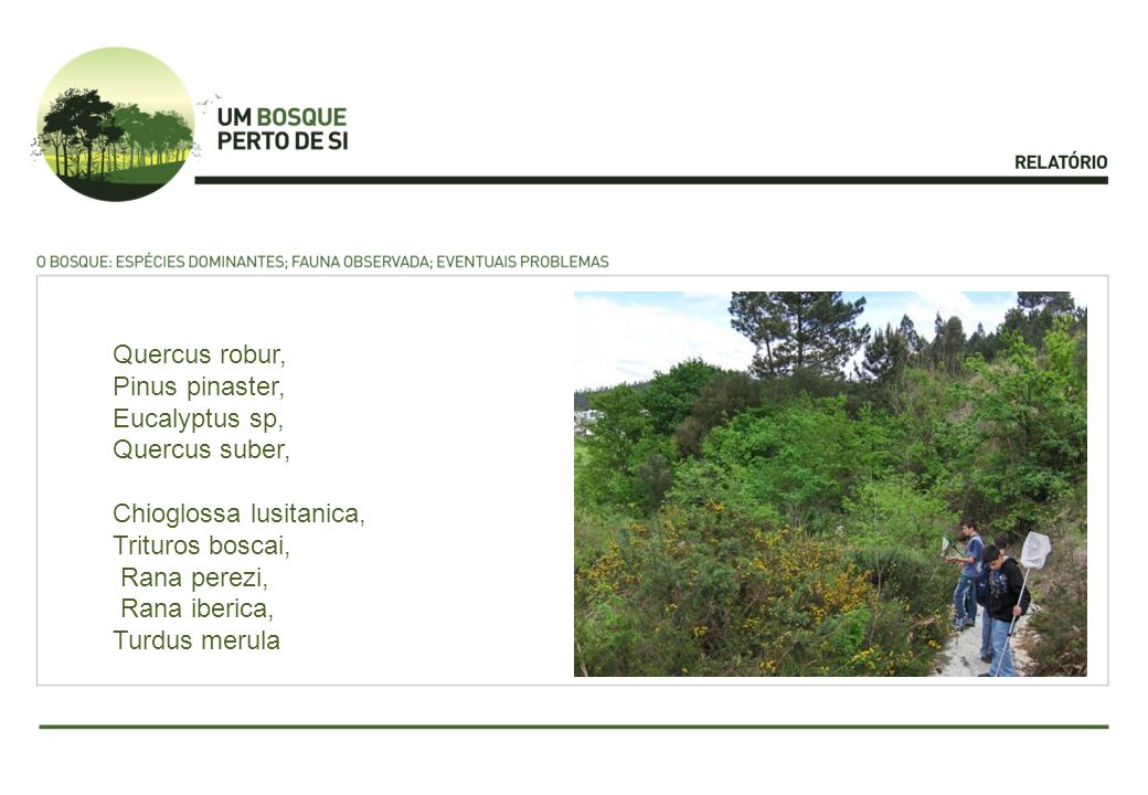 Quercus robur, Pinus pinaster, Eucalyptus sp, Quercus suber, Chioglossa lusitanica, Trituros boscai,