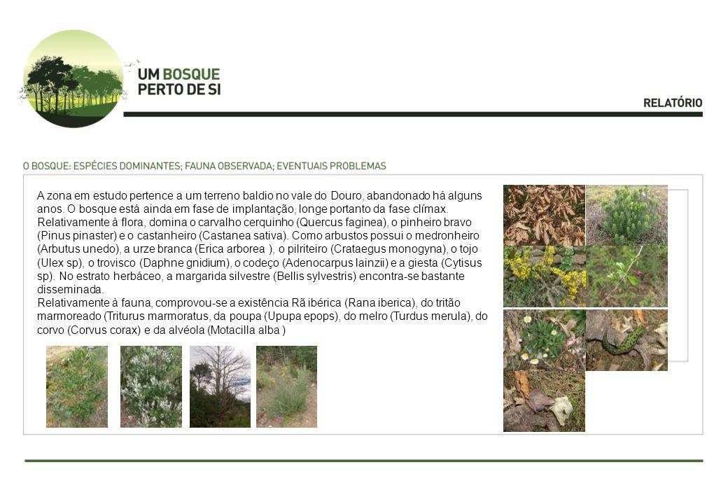 A zona em estudo pertence a um terreno baldio no vale do Douro, abandonado há alguns anos. O bosque está ainda em fase de implantação, longe portanto da fase clímax. Relativamente à flora, domina o carvalho cerquinho (Quercus faginea), o pinheiro bravo (Pinus pinaster) e o castanheiro (Castanea sativa). Como arbustos possui o medronheiro (Arbutus unedo), a urze branca (Erica arborea ), o pilriteiro (Crataegus monogyna), o tojo (Ulex sp), o trovisco (Daphne gnidium), o codeço (Adenocarpus lainzii) e a giesta (Cytisus sp). No estrato herbáceo, a margarida silvestre (Bellis sylvestris) encontra-se bastante disseminada.