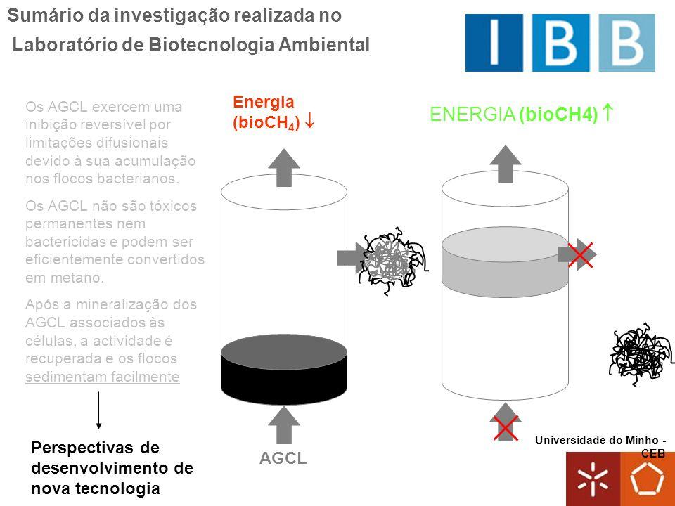 Sumário da investigação realizada no Laboratório de Biotecnologia Ambiental