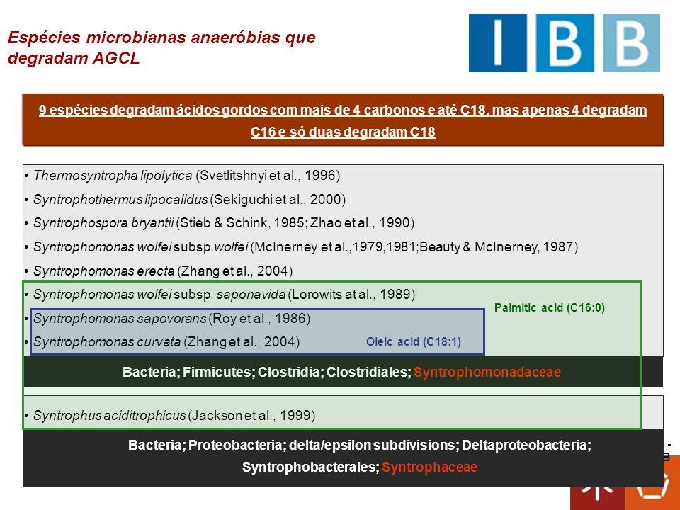 Bacteria; Firmicutes; Clostridia; Clostridiales; Syntrophomonadaceae