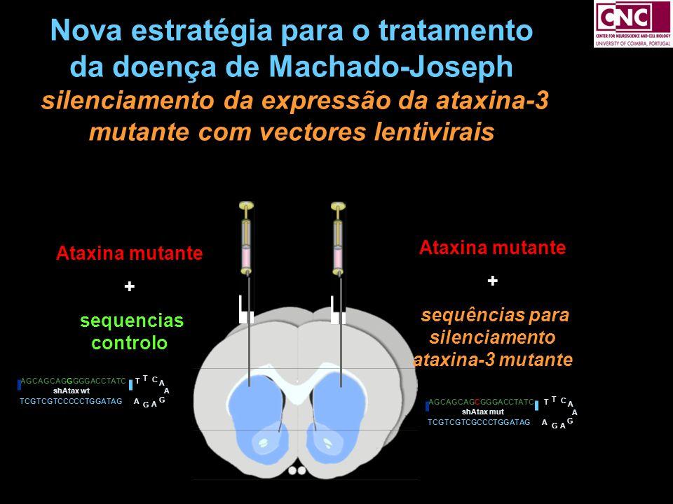 sequências para silenciamento ataxina-3 mutante