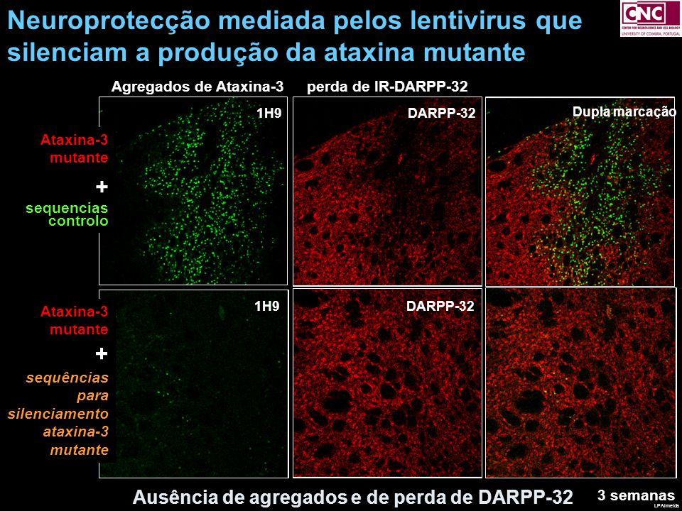 Neuroprotecção mediada pelos lentivirus que silenciam a produção da ataxina mutante