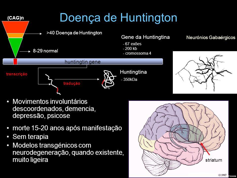 Doença de Huntington (CAG)n. huntingtin gene. 8-29 normal. 67 exões. 200 kb. - cromossoma 4. Gene da Huntingtina.