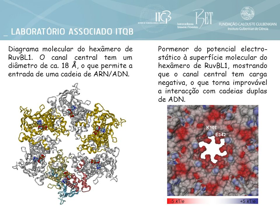 Diagrama molecular do hexâmero de RuvBL1