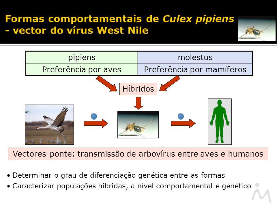 Formas comportamentais de Culex pipiens - vector do vírus West Nile