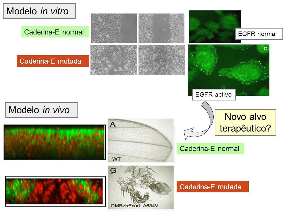 Modelo in vitro Modelo in vivo Novo alvo terapêutico