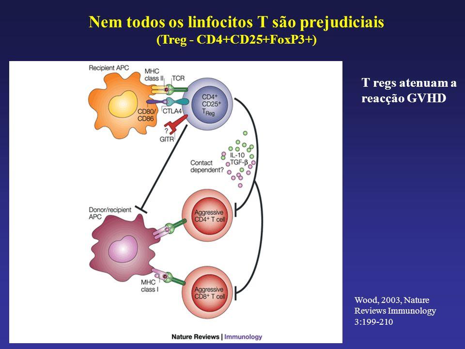 Nem todos os linfocitos T são prejudiciais (Treg - CD4+CD25+FoxP3+)