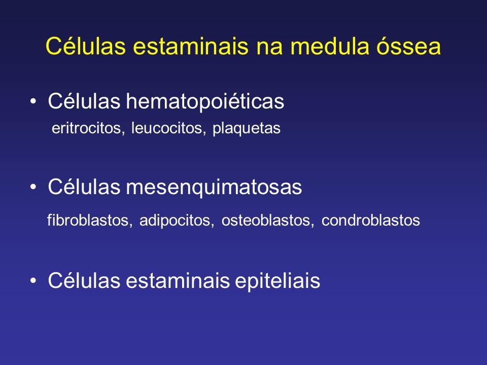 Células estaminais na medula óssea