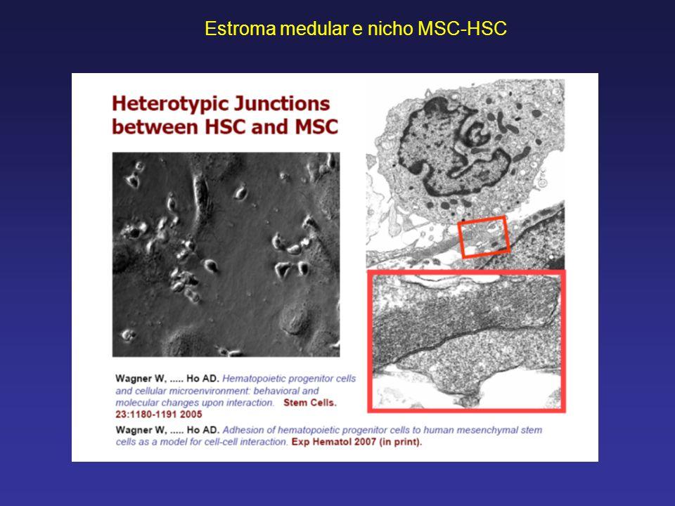 Estroma medular e nicho MSC-HSC