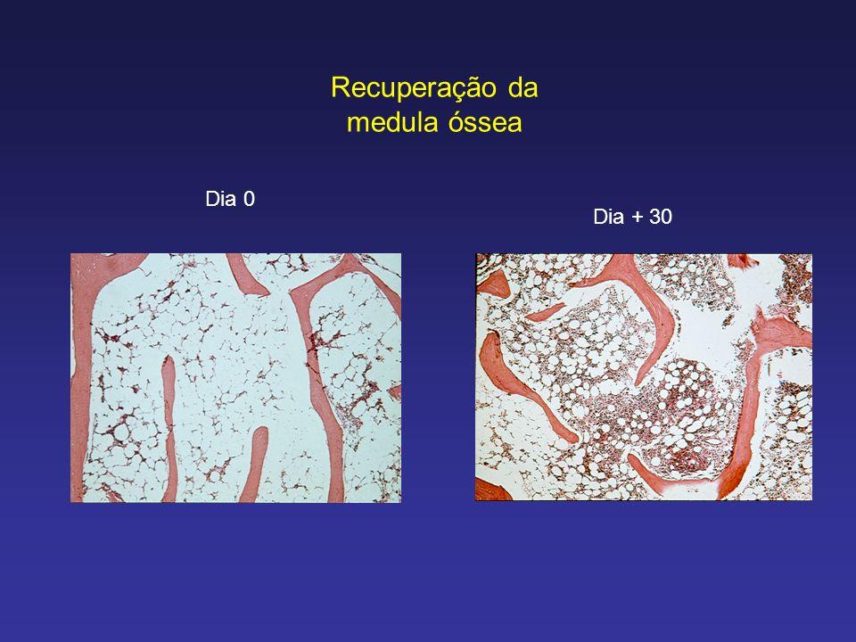 Recuperação da medula óssea