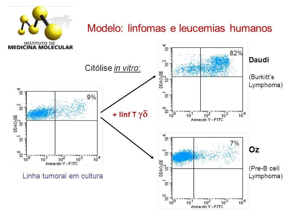 Modelo: linfomas e leucemias humanos