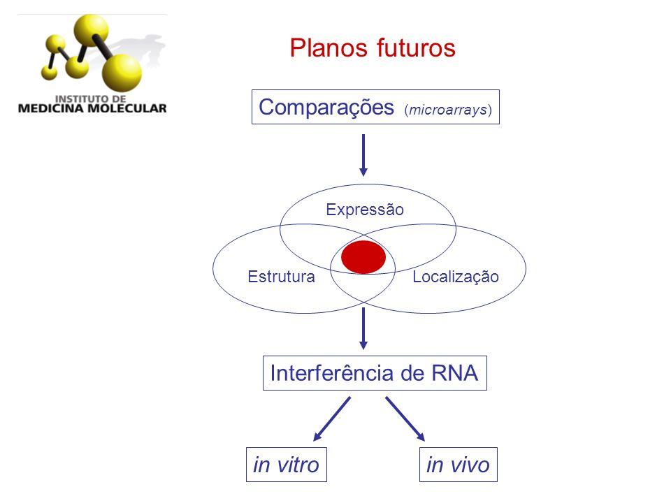 Planos futuros Comparações (microarrays) Interferência de RNA in vivo