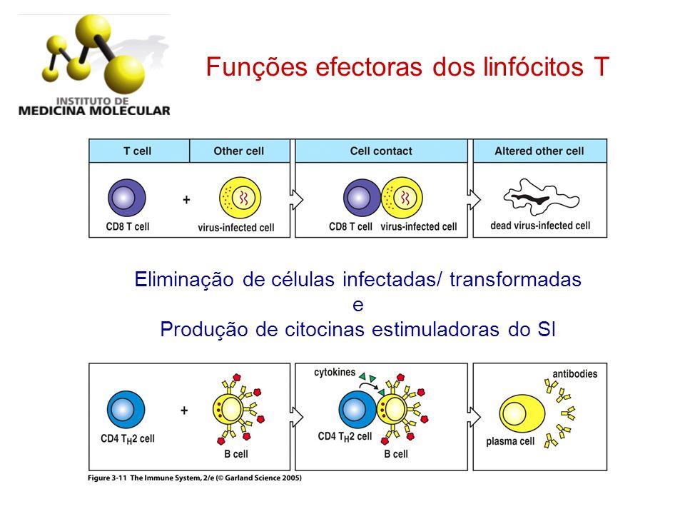 Figure 3-11 Funções efectoras dos linfócitos T
