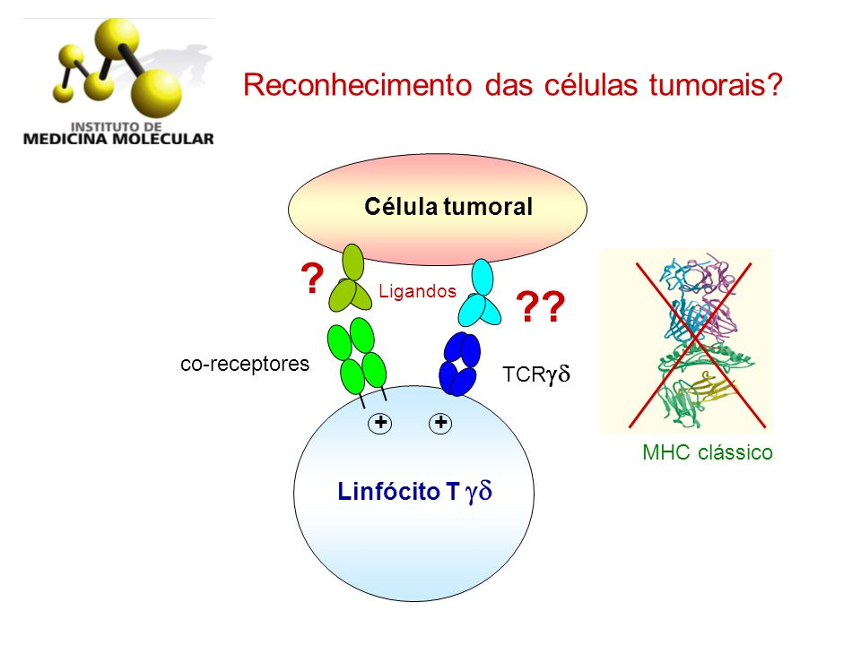 Reconhecimento das células tumorais Célula tumoral + +