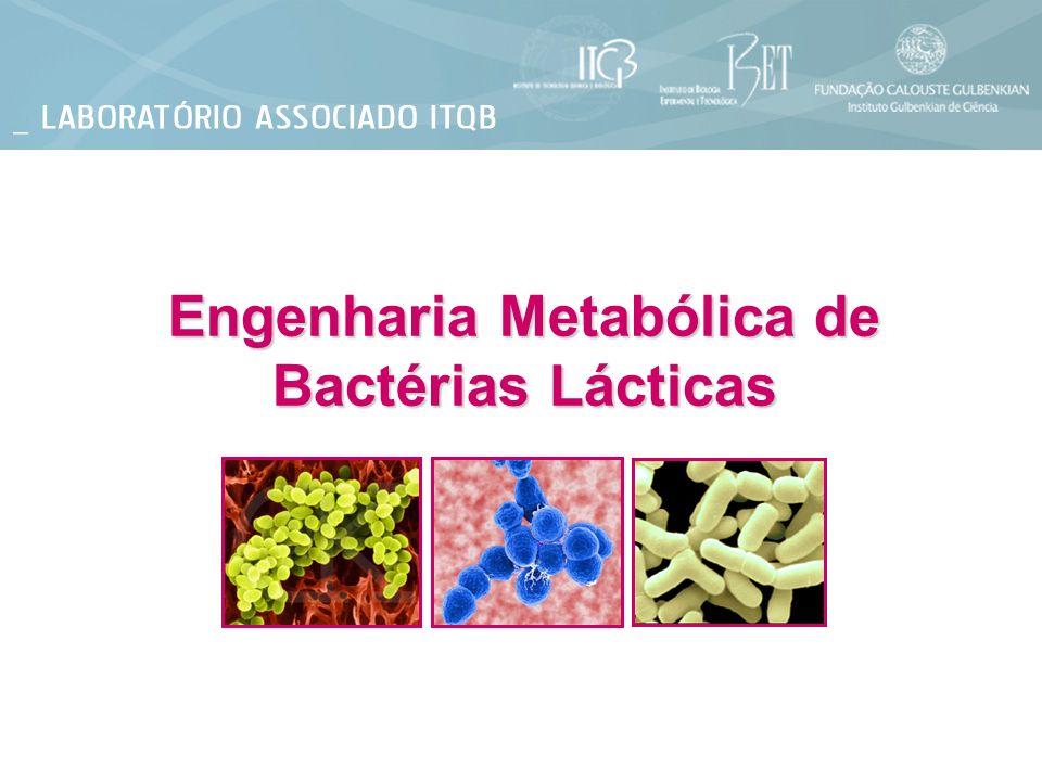 Engenharia Metabólica de Bactérias Lácticas