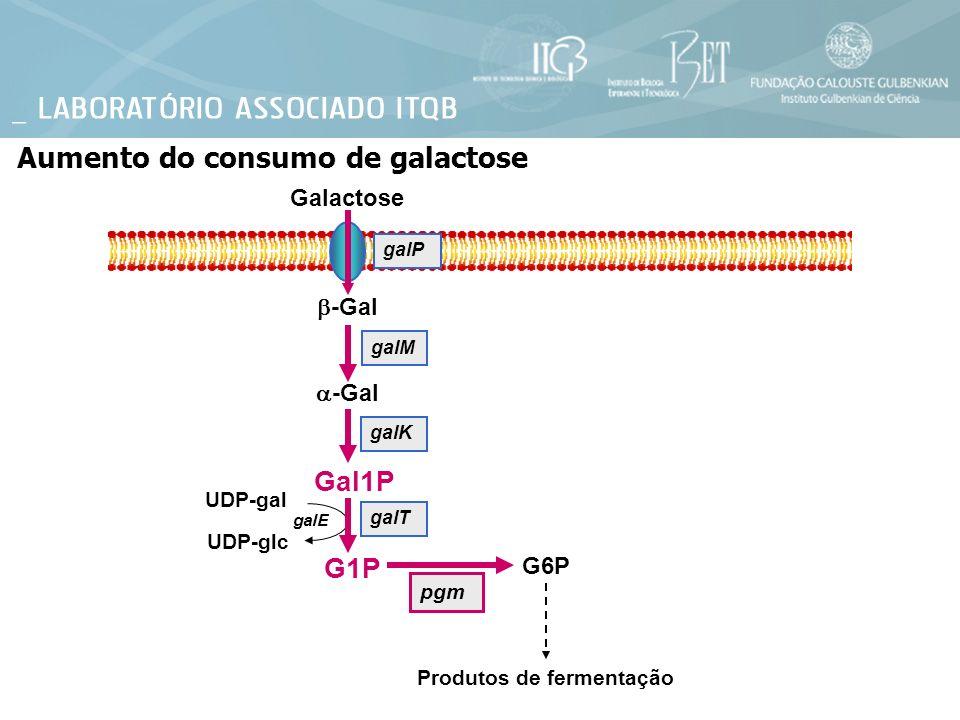 Aumento do consumo de galactose