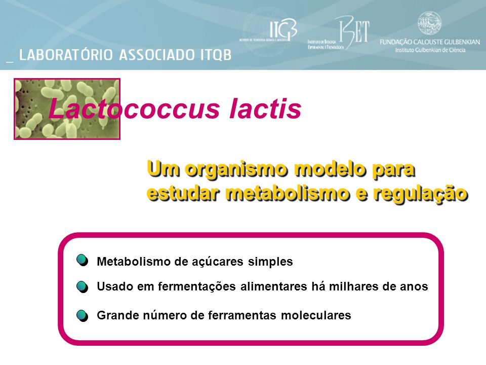 Lactococcus lactis Um organismo modelo para estudar metabolismo e regulação. Metabolismo de açúcares simples.