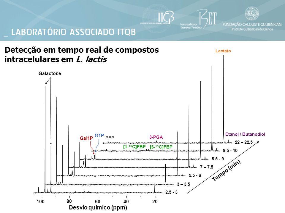 Detecção em tempo real de compostos intracelulares em L. lactis