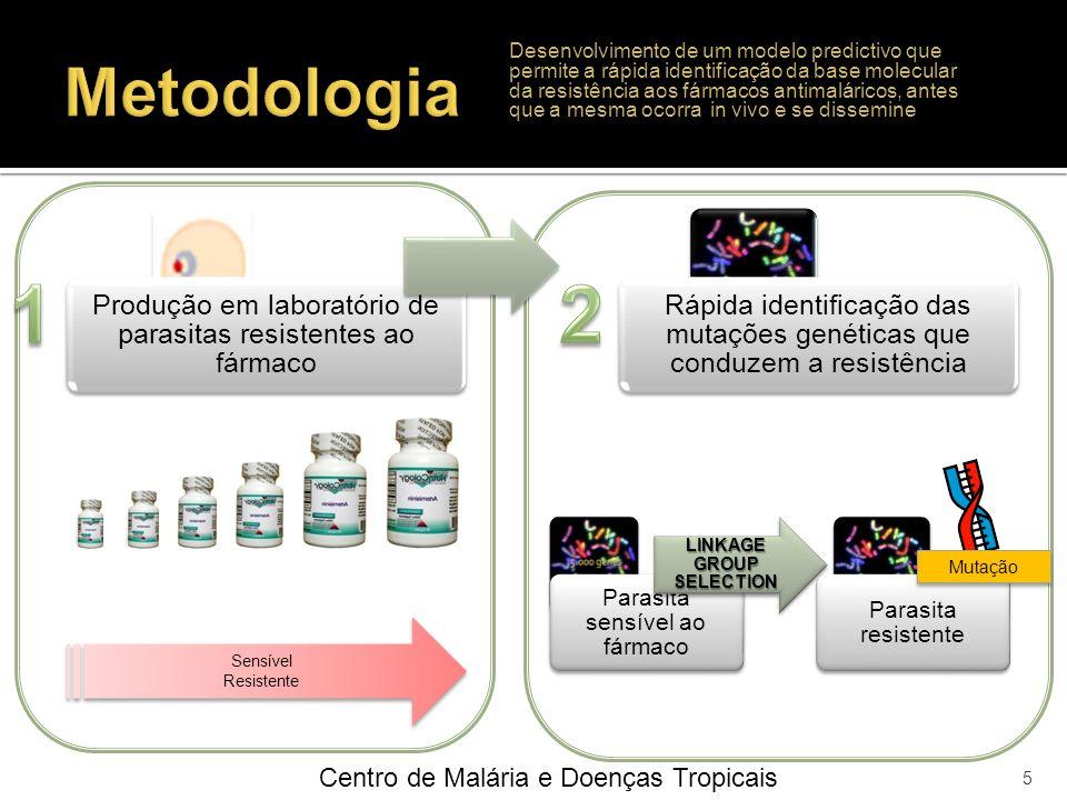 1 2 Metodologia Centro de Malária e Doenças Tropicais