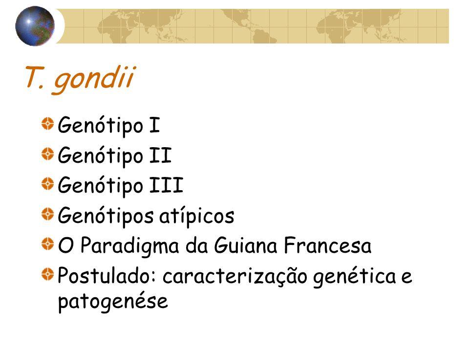 T. gondii Genótipo I Genótipo II Genótipo III Genótipos atípicos