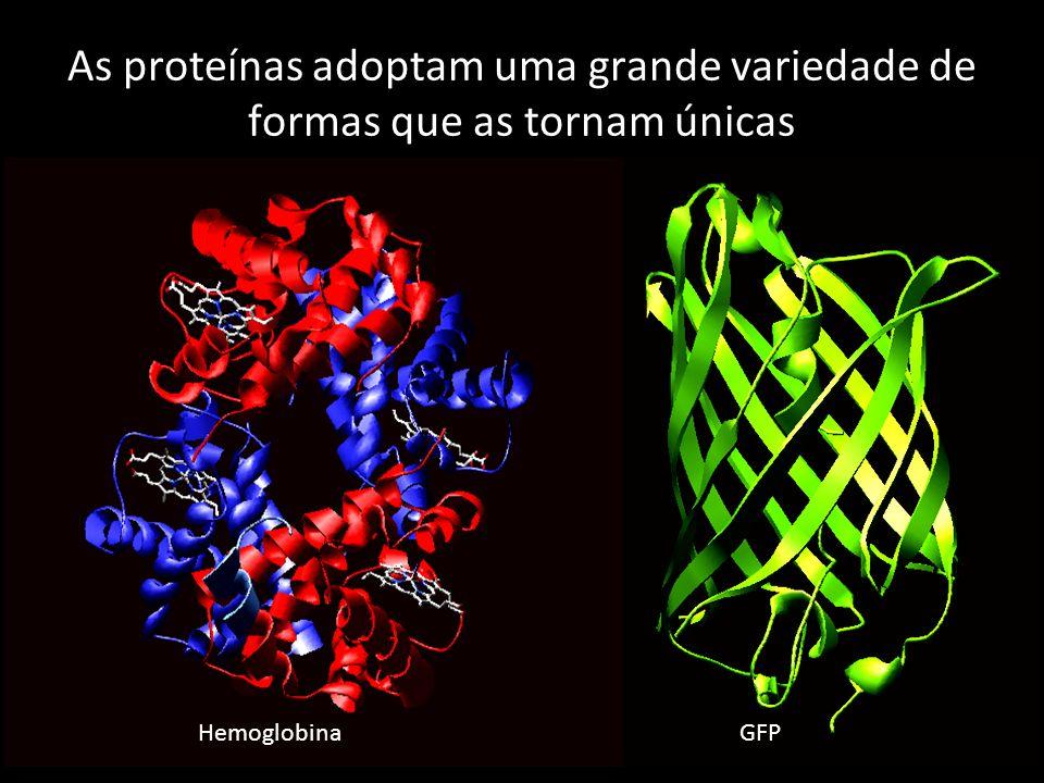 As proteínas adoptam uma grande variedade de formas que as tornam únicas