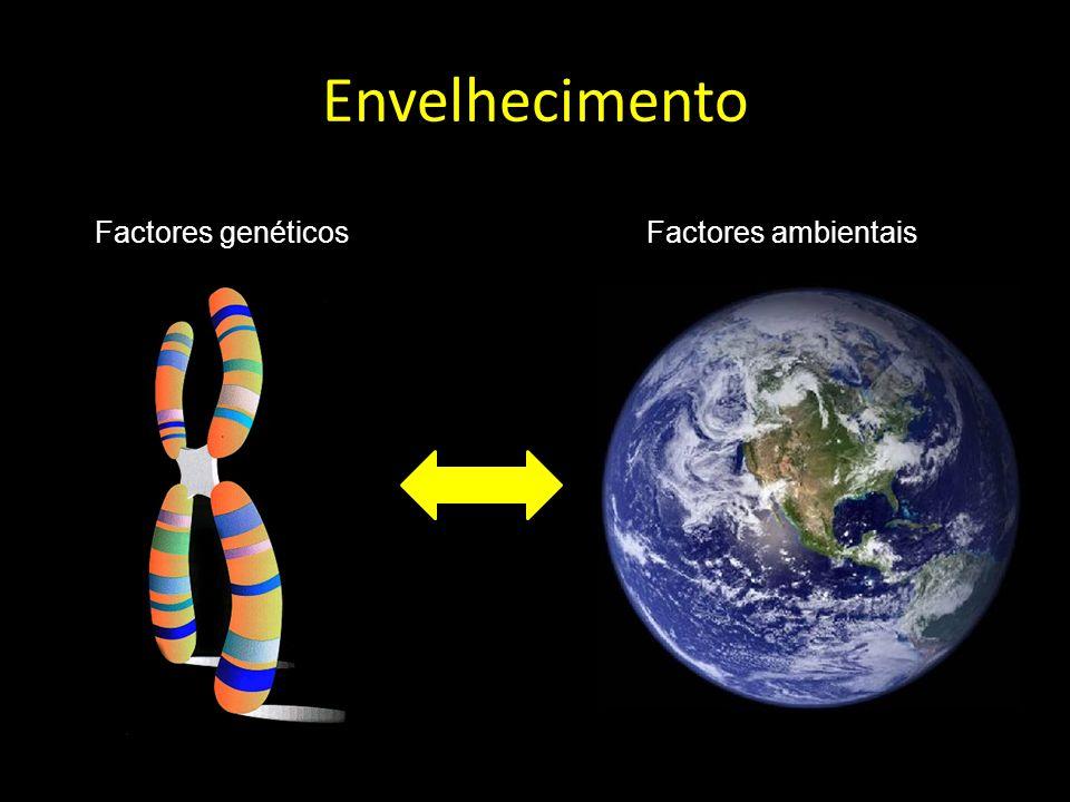 Envelhecimento Factores genéticos Factores ambientais
