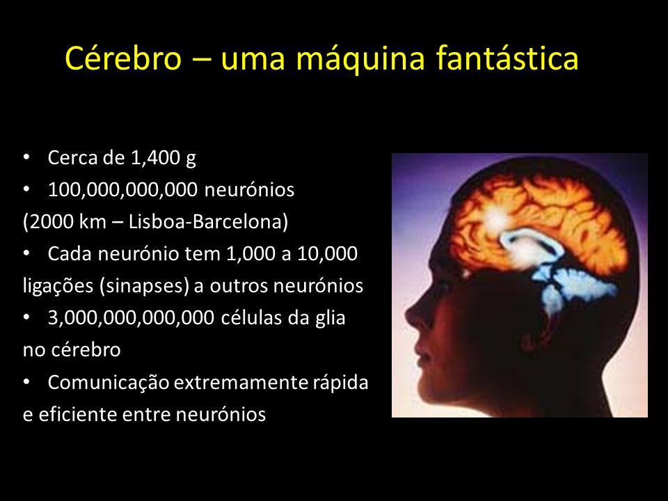 Cérebro – uma máquina fantástica
