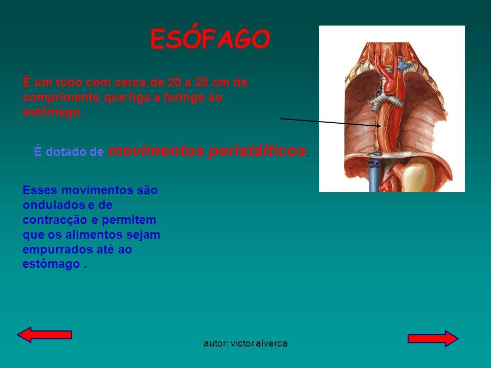 autor:victor alverca ESÓFAGO. É um tubo com cerca de 20 a 25 cm de comprimento que liga a faringe ao estômago.