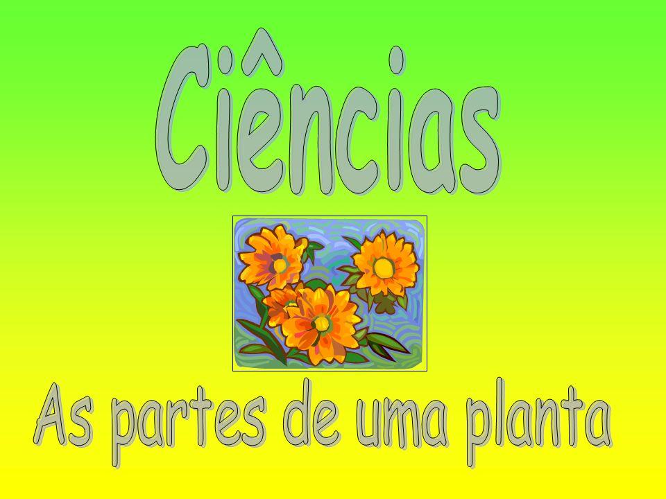 Ciências As partes de uma planta