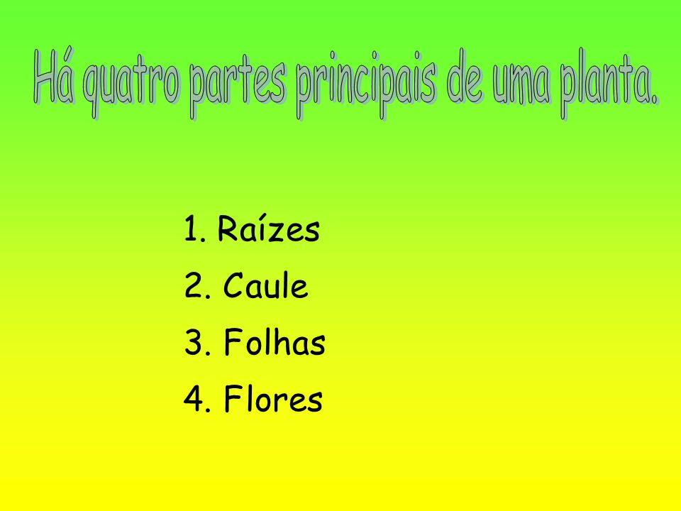 Há quatro partes principais de uma planta.