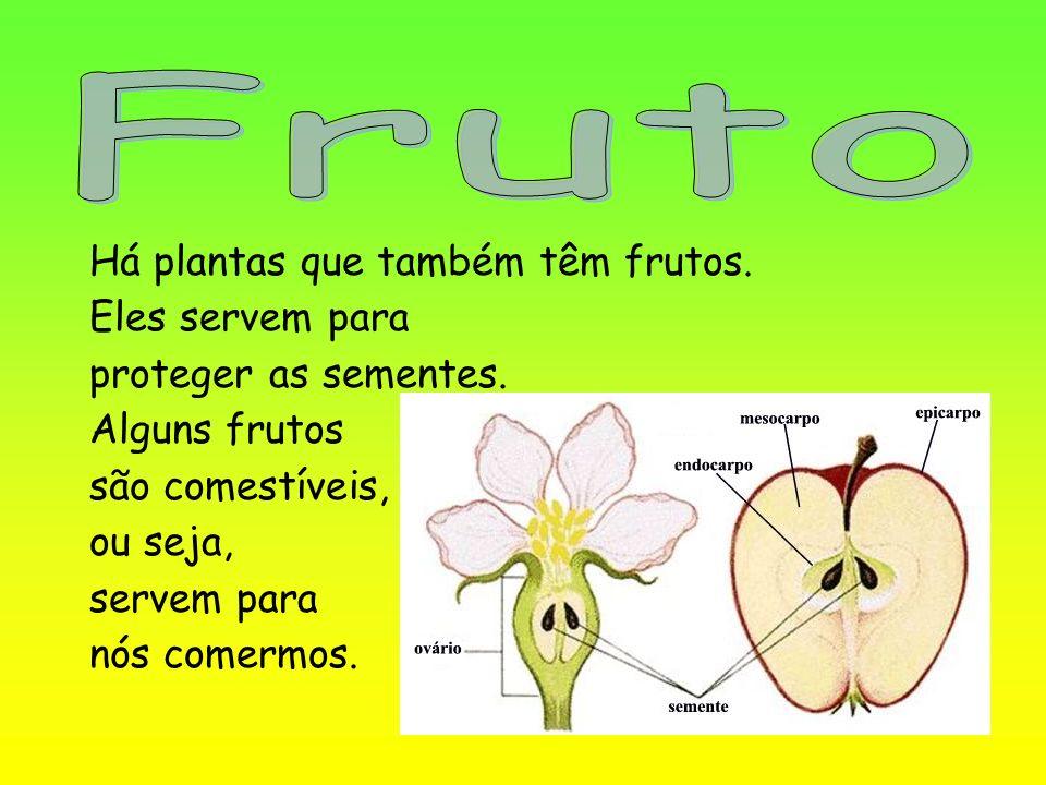 Fruto Há plantas que também têm frutos. Eles servem para