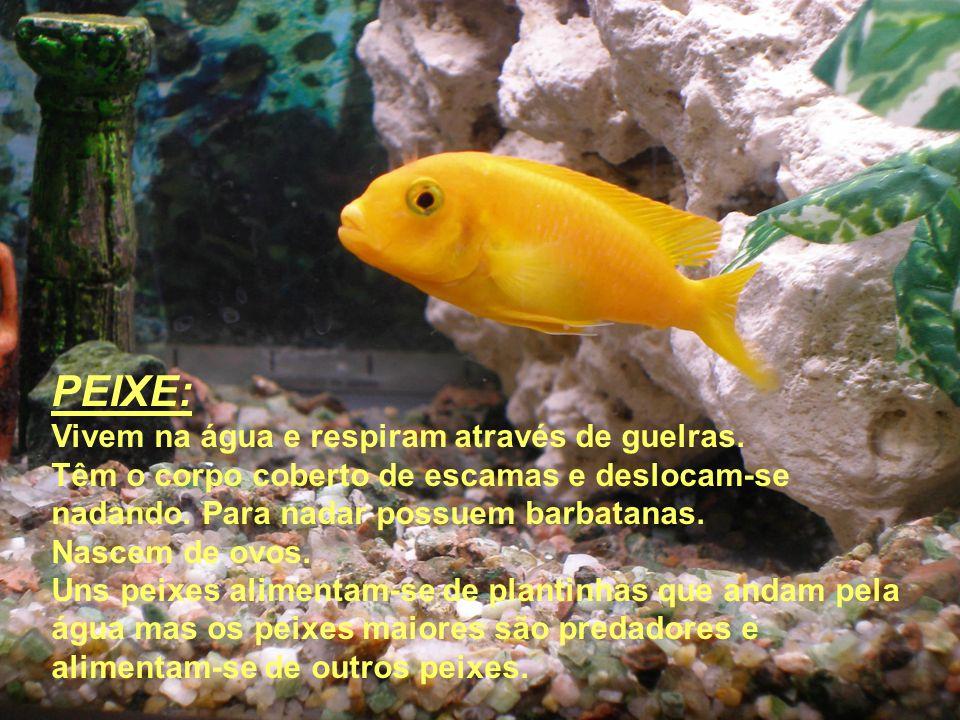PEIXE: Vivem na água e respiram através de guelras.