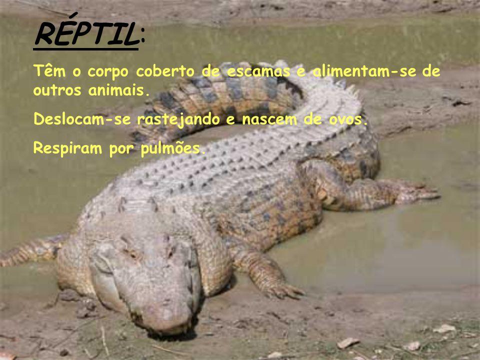 RÉPTIL: Têm o corpo coberto de escamas e alimentam-se de outros animais. Deslocam-se rastejando e nascem de ovos.