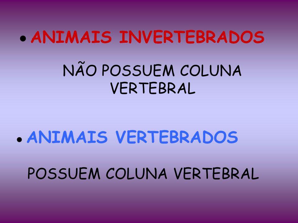 ●ANIMAIS INVERTEBRADOS