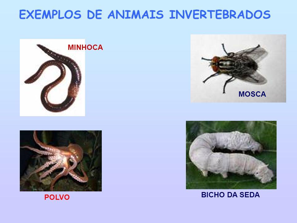 EXEMPLOS DE ANIMAIS INVERTEBRADOS