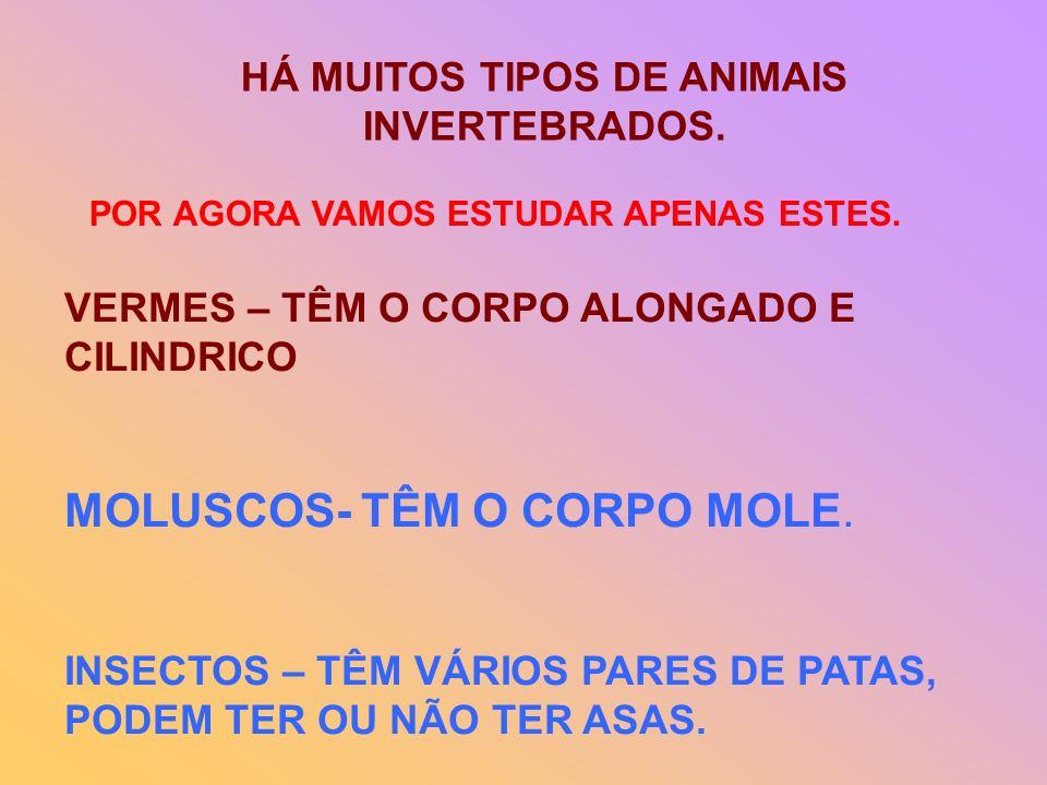 HÁ MUITOS TIPOS DE ANIMAIS INVERTEBRADOS.