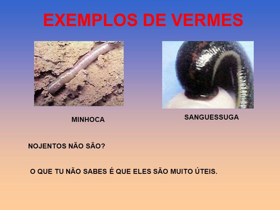 EXEMPLOS DE VERMES SANGUESSUGA MINHOCA NOJENTOS NÃO SÃO