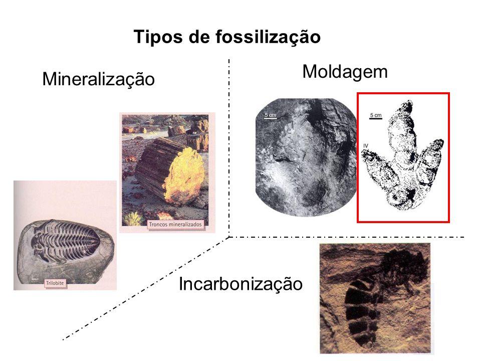 Tipos de fossilização Moldagem Mineralização Incarbonização