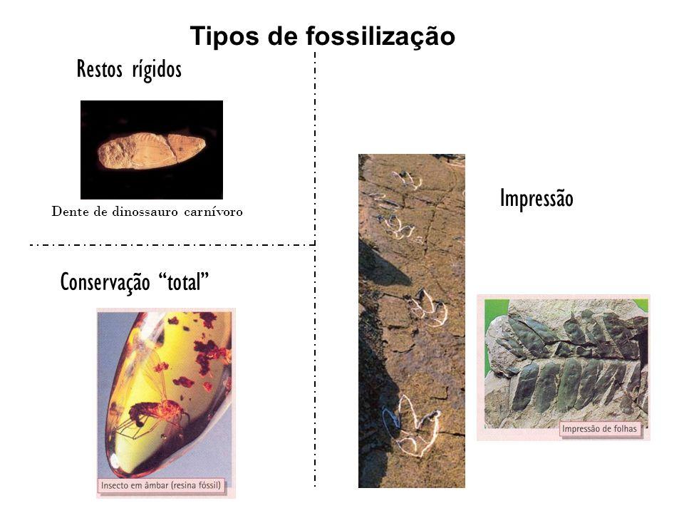 Tipos de fossilização Restos rígidos Impressão Conservação total
