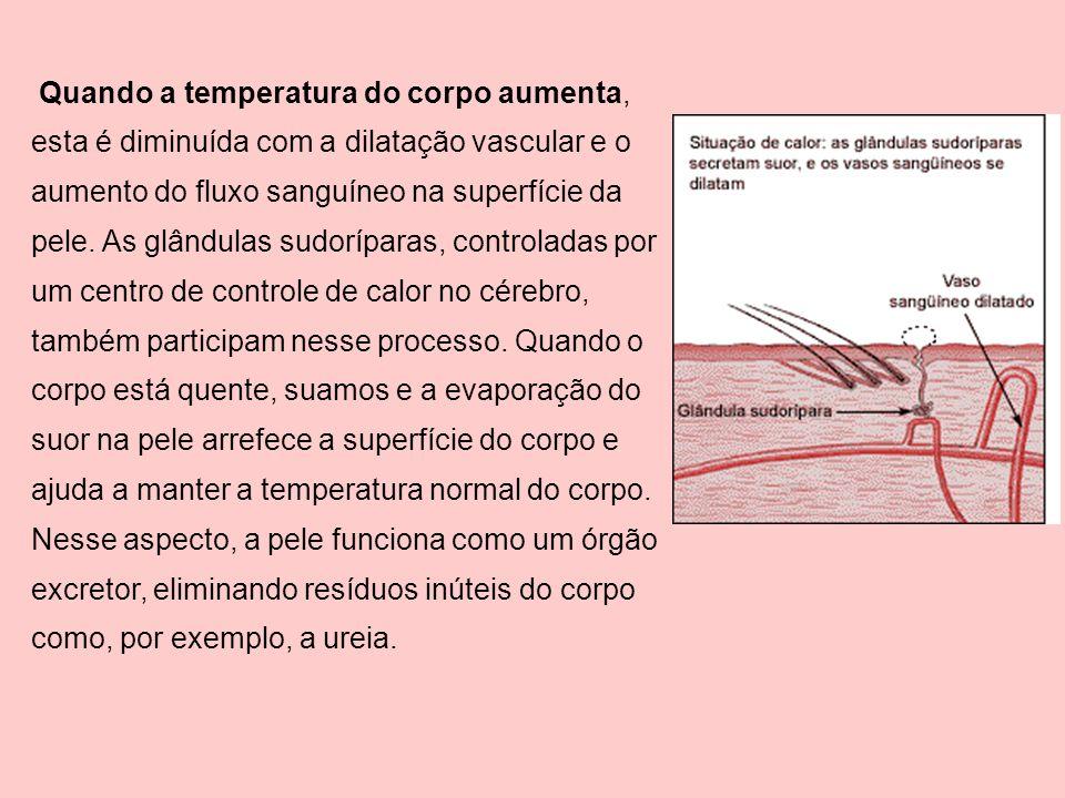 Quando a temperatura do corpo aumenta, esta é diminuída com a dilatação vascular e o aumento do fluxo sanguíneo na superfície da pele.