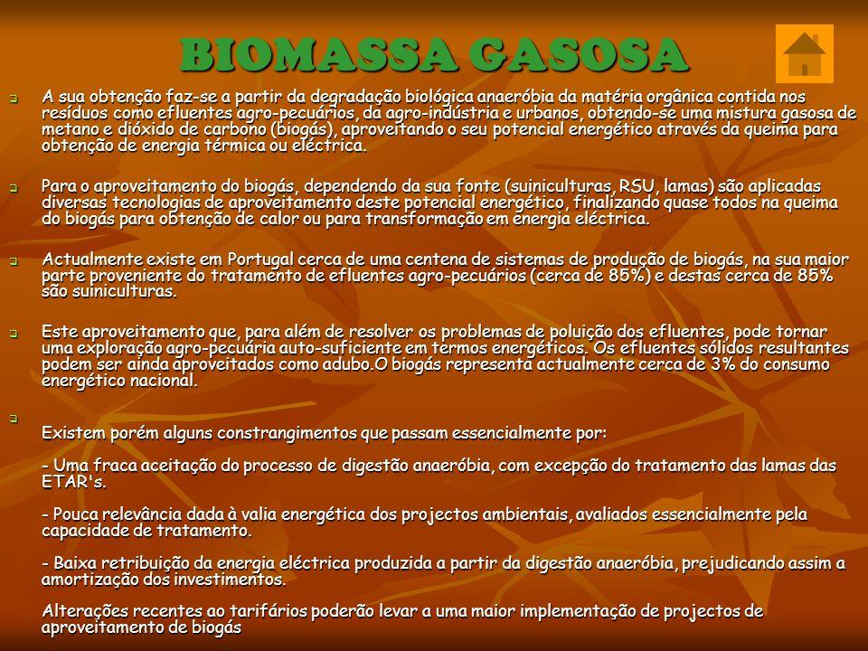 BIOMASSA GASOSA
