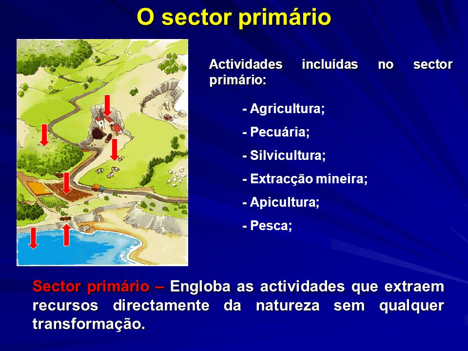 O sector primárioActividades incluídas no sector primário: - Agricultura; - Pecuária; - Silvicultura;