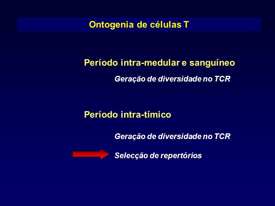 Período intra-medular e sanguíneo