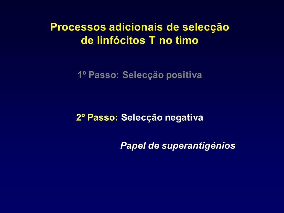 Processos adicionais de selecção de linfócitos T no timo
