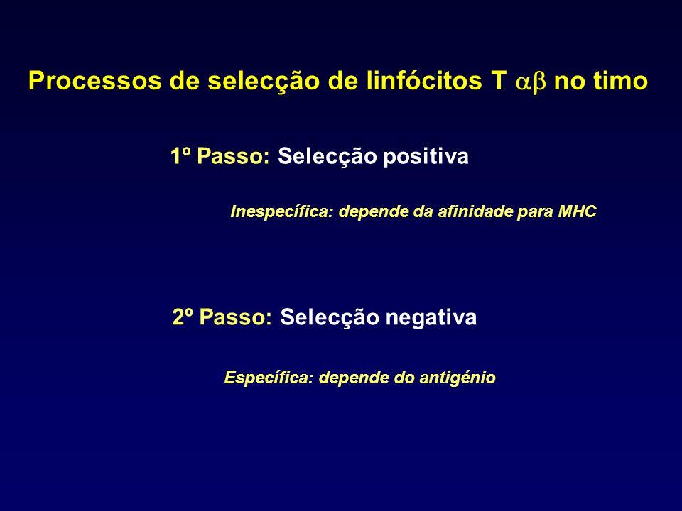 Processos de selecção de linfócitos T ab no timo