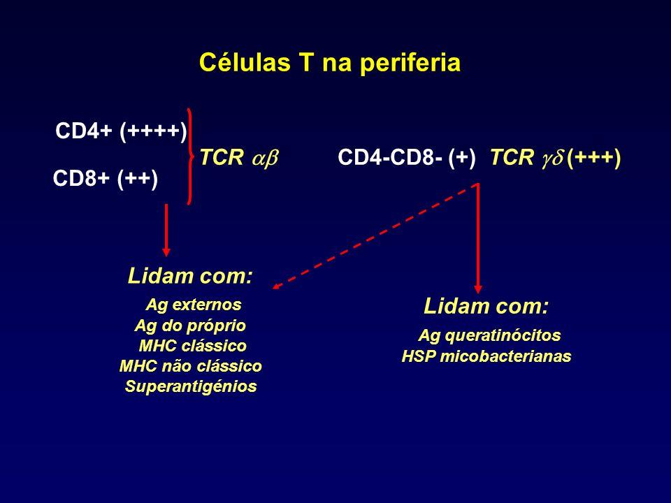 Lidam com: Ag queratinócitos HSP micobacterianas