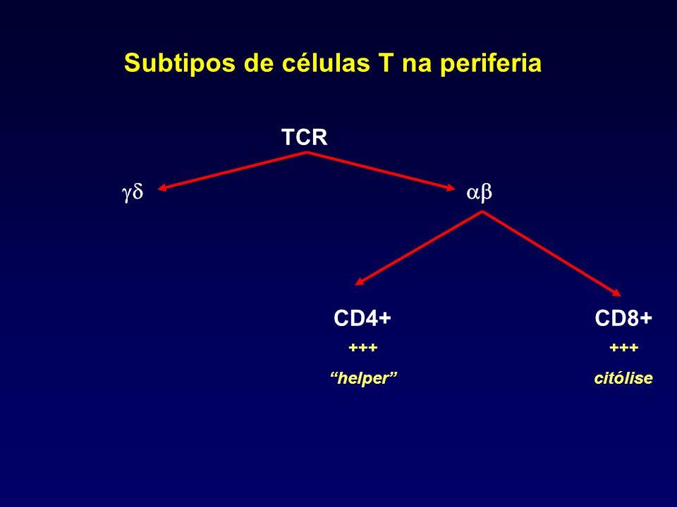 Subtipos de células T na periferia