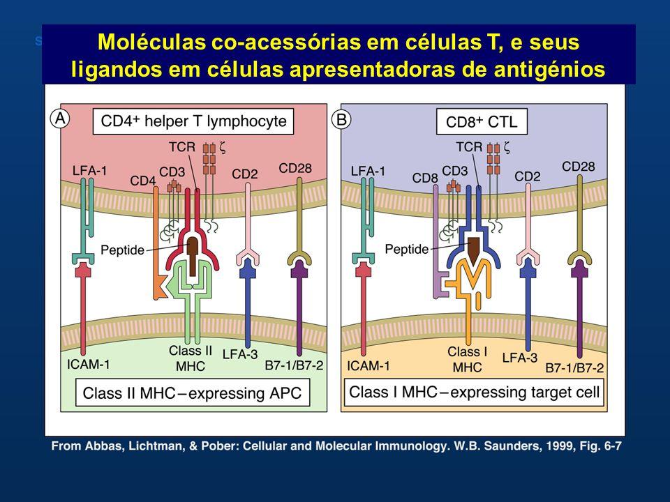 Moléculas co-acessórias em células T, e seus ligandos em células apresentadoras de antigénios