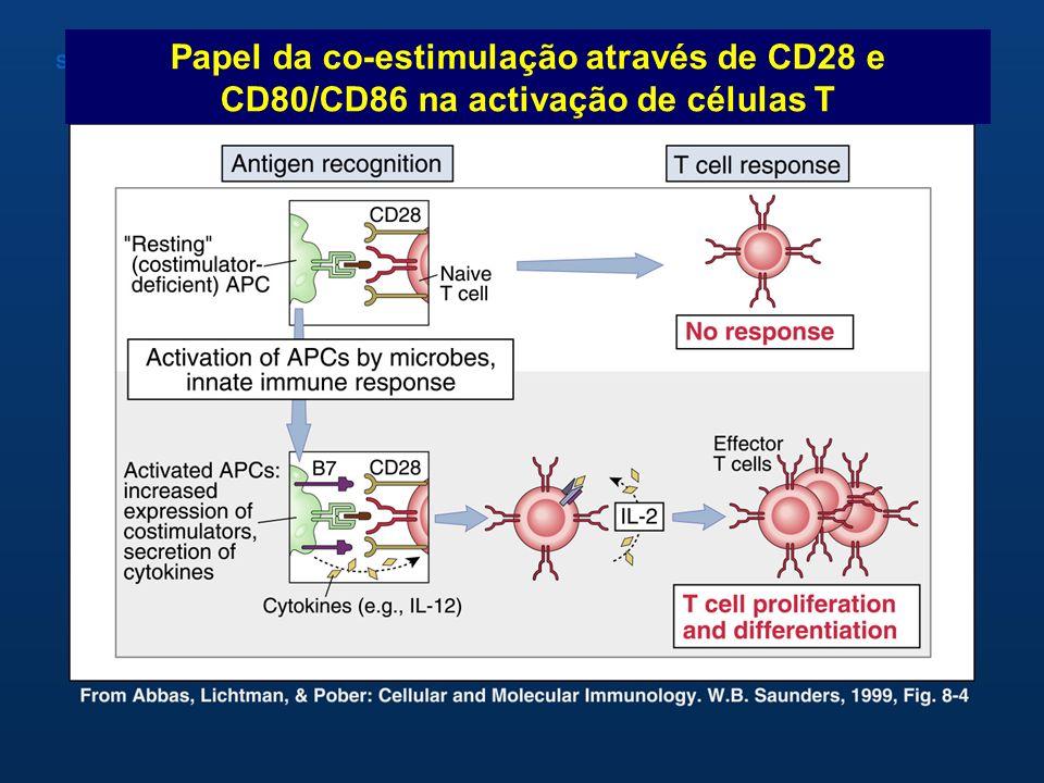 Papel da co-estimulação através de CD28 e CD80/CD86 na activação de células T